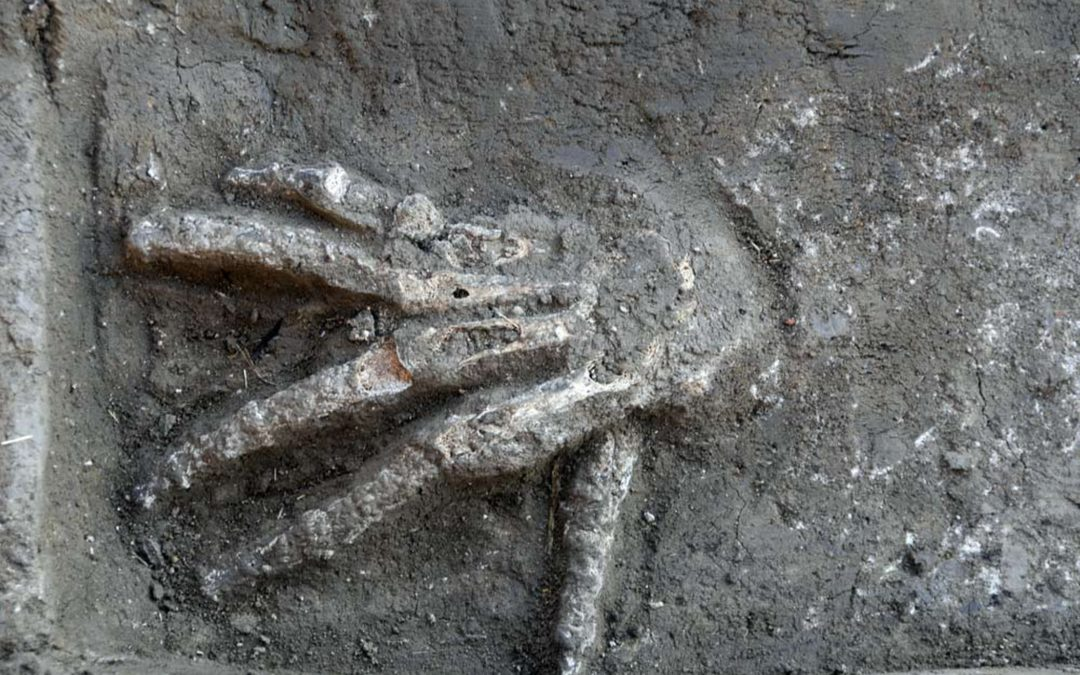 Severed Hands Uncovered at Avaris