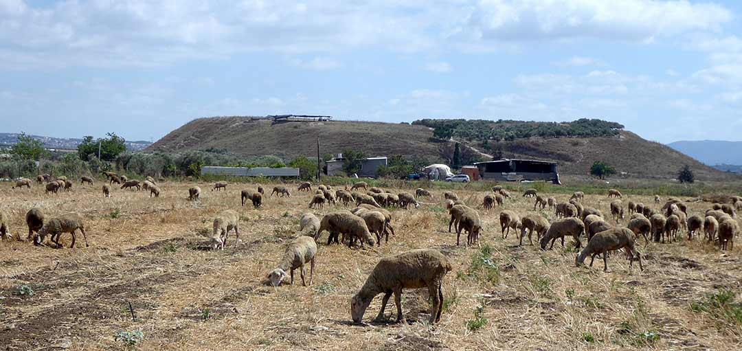 Tel Keisan in the Akko plain in the Galilee region of Israel