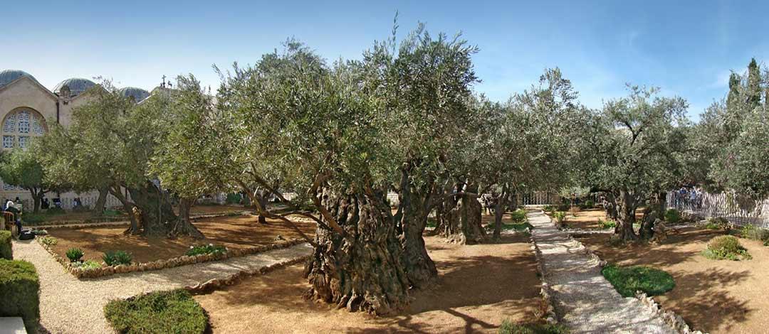Garden of Gethsemane, Mount of Olives, Jerusalem